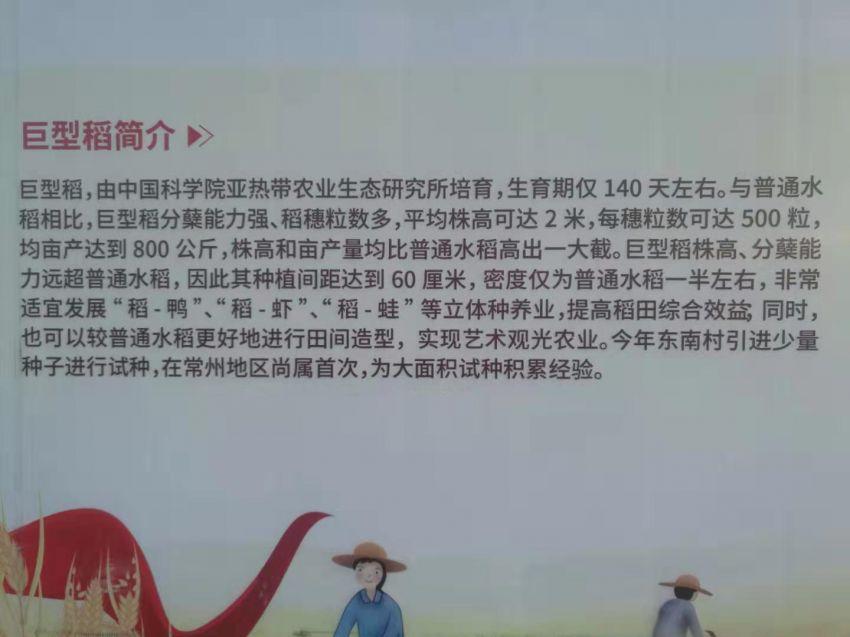 巨型稻简介.jpg