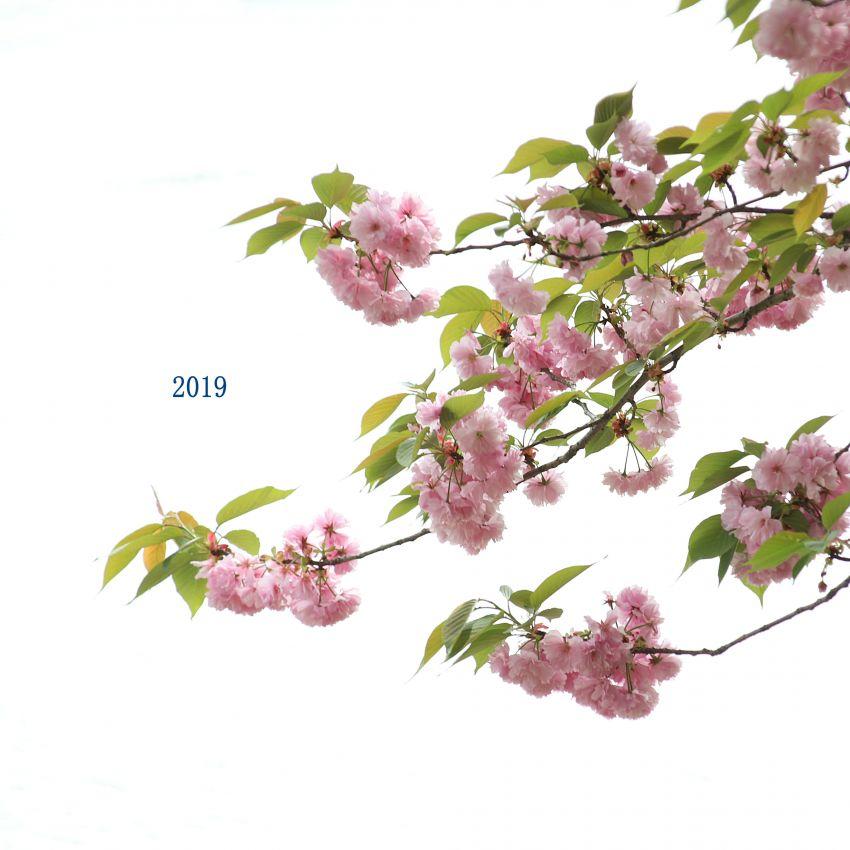 IMG_3149_副本.JPG
