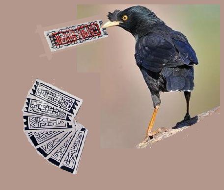 鸟算命.png