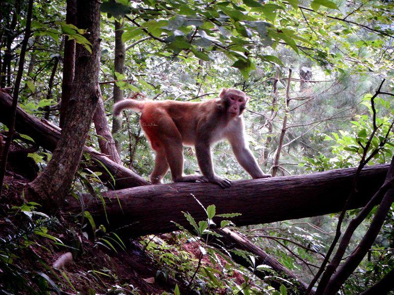森林公园136.jpg