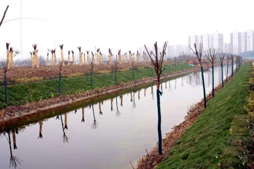 图为兴隆河生态修复升级改造后现场一景2.jpg