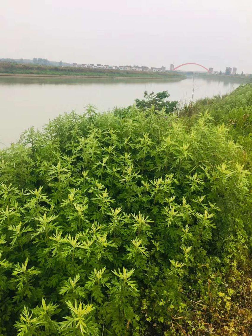 胥河1.jpg