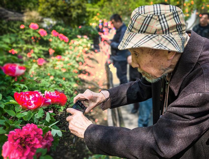 百岁老人拍牡丹.jpg