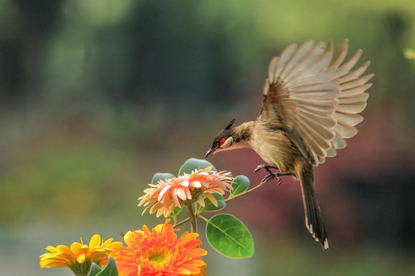 鸟4.jpg