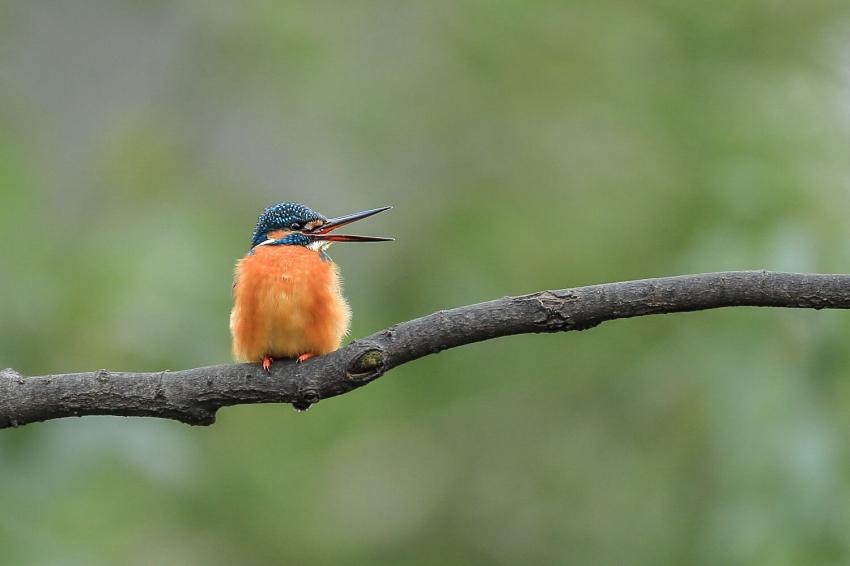 鸟5.jpg