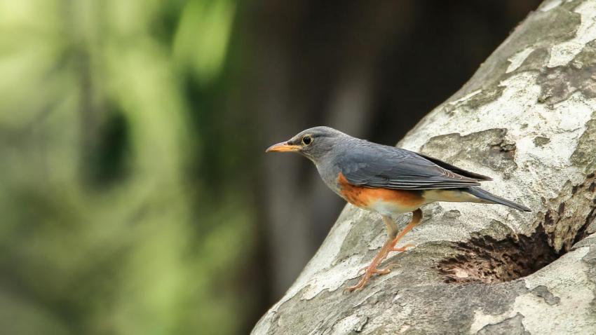 鸟9.jpg