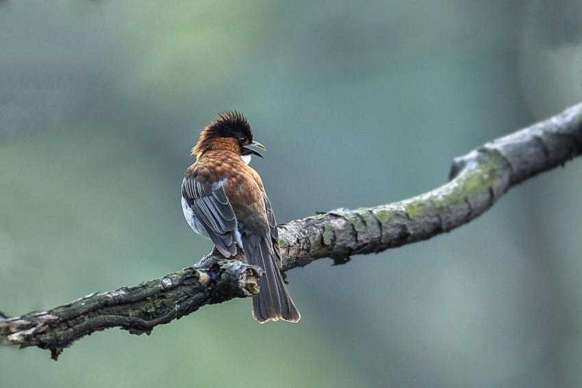 鸟11.jpg