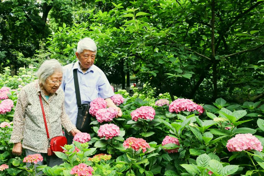 《老兵伉俪赏花乐》+曹志敏+15366809557+俩位1948年参军的老兵伉俪均姓潘,潘奶奶94岁,潘爷爷92岁,阳光明媚时,他们享受春光、享受绣球花香。IMG_4417.jpg