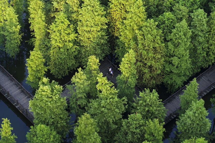 2.翠竹公园之夏--绿色(组照2).jpg